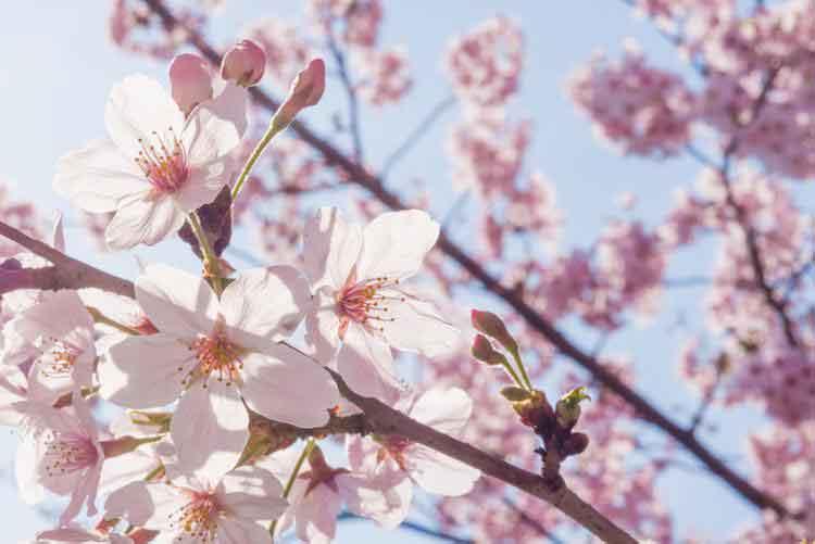 hanoi weather spring